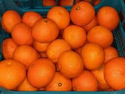 Апельсин цитрусовые