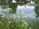 Аренда беседки над озером в Клейниках - фото 3