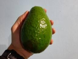 Авокадо семил-34