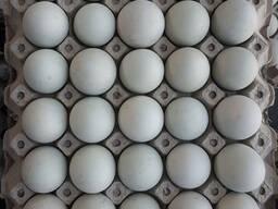 Білі та коричневі яйця