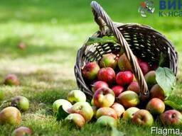 """Бизнес-идея """"Яблочный сад"""""""