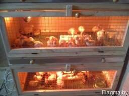 Брудер для цыплят от 0 - фото 5