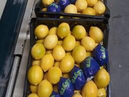 Буйны опт турэцкага цытрыны CIF DAP CPT Лимон