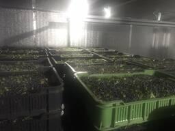 Черника свежая урожая 2021 г