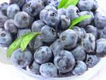 Чудо-ягодница «Домашние грядки» – Голубика - фото 5