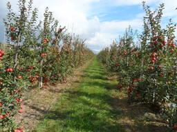Садоводческое хозяйство в Беларуси