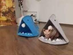 Домик для Кота - Акула с бубоном