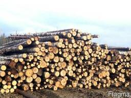 Лесоматериал хвойных пород