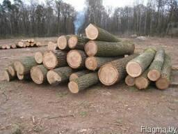 Дуб лес круглый (пиловочное бревно сорт 2-3, тех. сырьё)