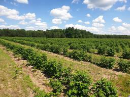 Фермерское хозяйство Брестская область