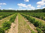 Фермерское хозяйство Брестская область - фото 5