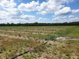 Фермерское хозяйство Брестская область - фото 8