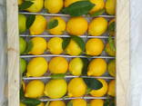 Фрукты, сухофрукты и овощи из Узбекистана - фото 8