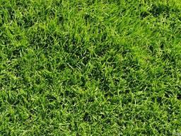 Газонная трава Классическая PRO