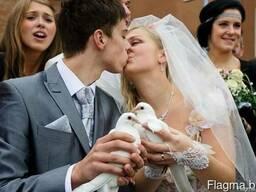 Голуби на свадьбу, голуби на праздник