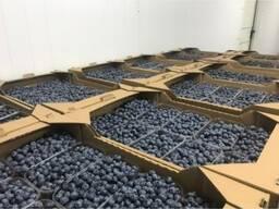 Голубика РБ, урожай 2021г. Сетевое качество.