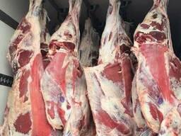 Говядина на кости, блочное мясо, живой скот