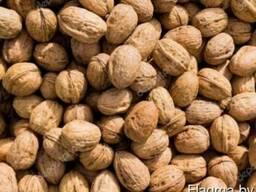 Грецкий орех в скорлупе 28