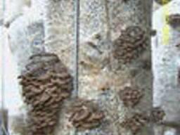Грибные блоки, мицелий вешенки