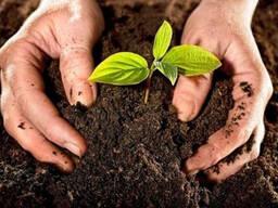 Грунт, земля, плодородный слой, чернозем, плодородная земля.