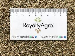 Покупаем пшеницу, рожь, овес, кукурузу, предоплата, самовывоз