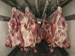Ищу поставщика говядины (бык, корова)