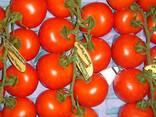 Испанские овощи. Прямые поставки. - фото 6