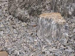 Каменная крошка Кора