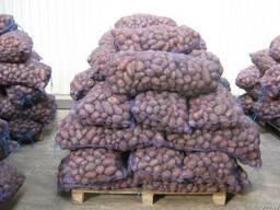 Картофель 6 оптом 0,25 руб/кг с НДС от собственника.