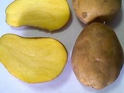 Картофель 6 , в сетке