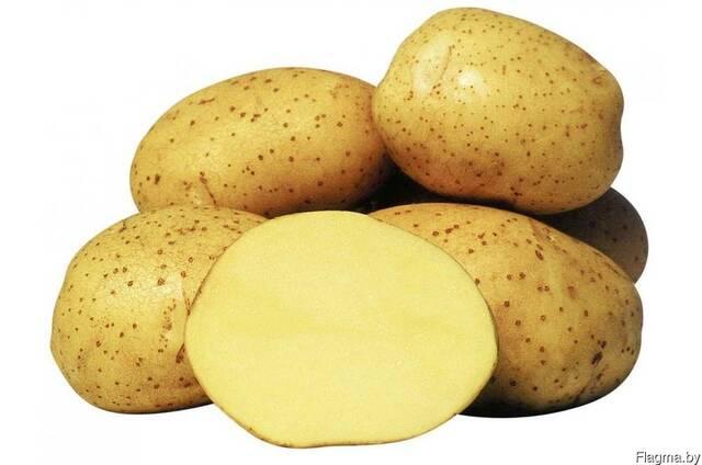 Картофель чипсовый