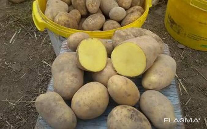 Картофель Домашний, Доставка Бесплатно