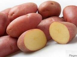 Картофель красных сортов