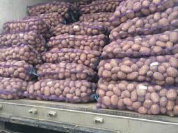 Картофель продовольственный