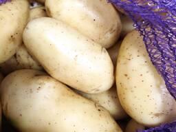 Картофель мытый Королева Анна