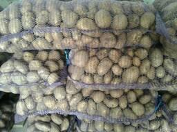 Картофель продовольственный (без док. на кольцевую гниль)