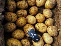 Картофель семенной - Гала Элита