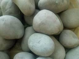 Картофель семенной, сорт: Скарб, Элита Пуховичский р-н