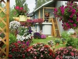 Кашпо и цветы для балкона