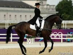 Катание на лошадях тренажерный зал сауна
