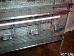Клетки для кроликов - фото 2