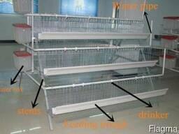 Клетки для птиц (перепела, куры и т. д. )