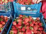 Фермерское хозяйство Брестская область - фото 14
