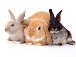 Комбикорм для кроликов К-92-1