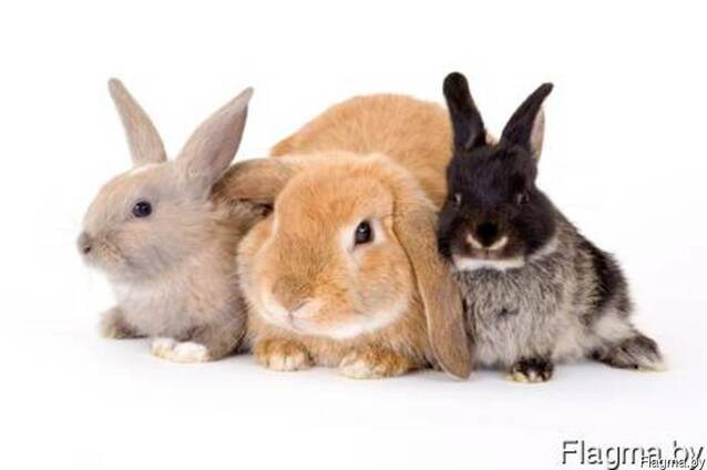 Комбикорм для кроликов КК-92