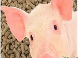 Комбикорм для свиней СК-55