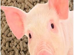 Комбикорм для свиней СК-55-С