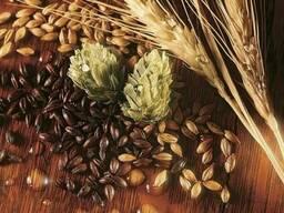 Концентрат пшеничного солода светлый(КПСС)