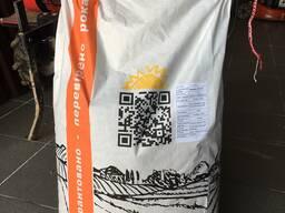 Кремень 200СВ семена кукурузы ФАО 200 (украинская селекция)