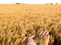 Куплю ячмень, новый урожай-2021